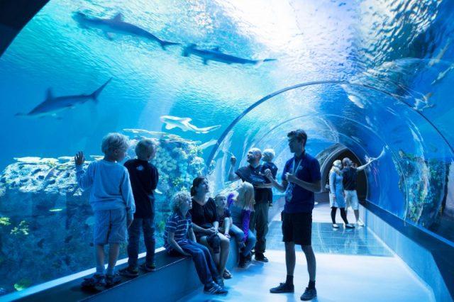 Fem sjove oplevelser hos Den Blå Planet i København