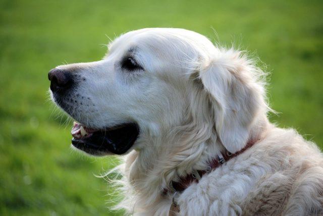 Køb billigt hundefoder fra Carnilove hos Simbasfoder.dk
